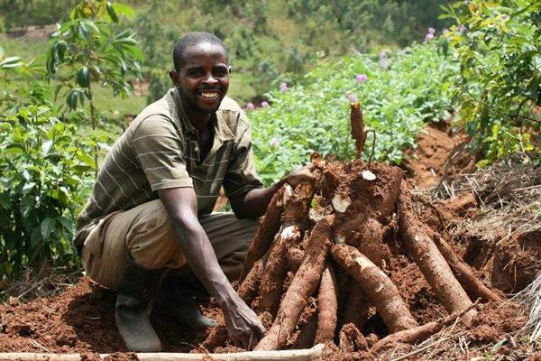 坦桑尼亚农业保险计划遭催促