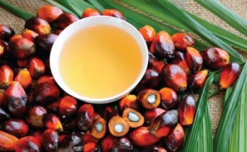 加纳棕榈油生产