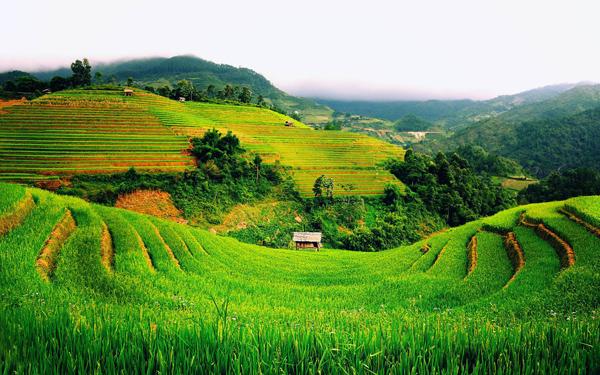加纳农业发展情况