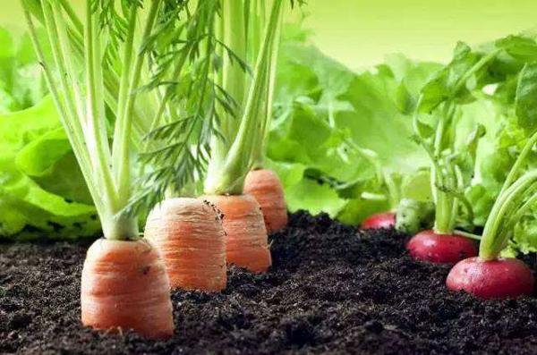 埃及农产品出口市场情况