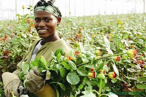 塞内加尔花生生产情况