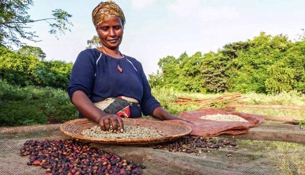 尼日利亚化肥市场供需现状