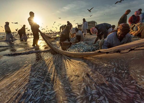 农业、畜牧业和渔业是坦工业化进程中最主要的三大产业