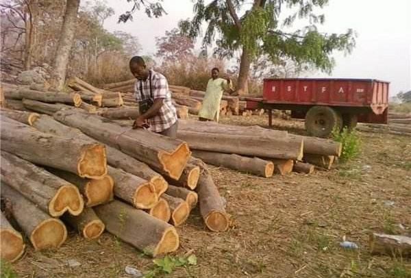 莫桑比克全面禁止出口未经加工的原木