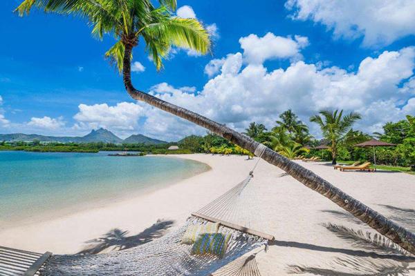 加纳欢迎投资者探索该地区椰子行业的机会