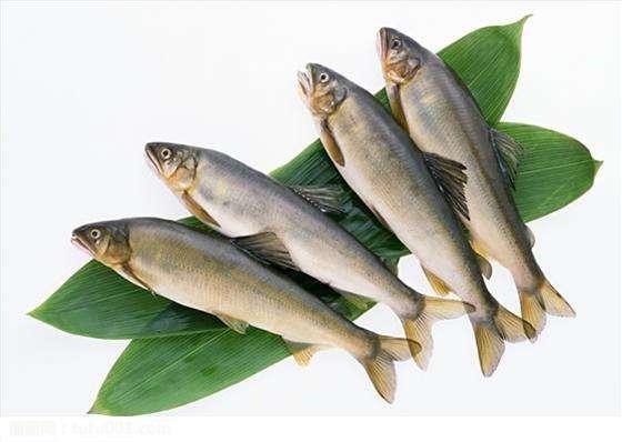 尼日利亚鱼类养殖情况