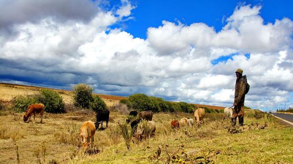 纳米比亚2019年畜牧业和农业进出口情况