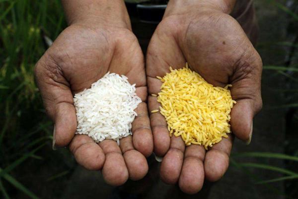安哥拉每年花费2600万美元从几个国家进口大米