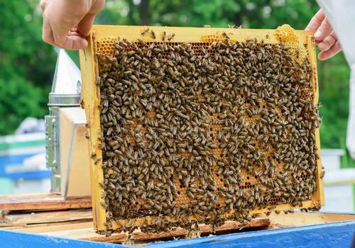 坦桑尼亚养蜂业现状