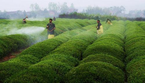 受干旱影响摩洛哥谷物产量减少4%