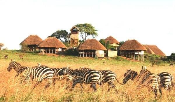疫情之下赞比亚如何保障农业发展?