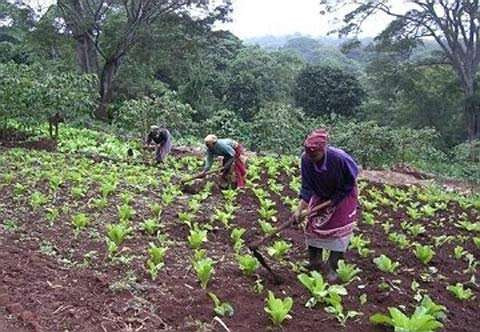 纳米比亚农业部表示纳国家粮食储备消耗殆尽