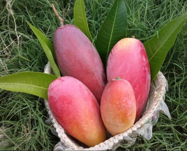 突尼斯水果出口量虽降但收入增长