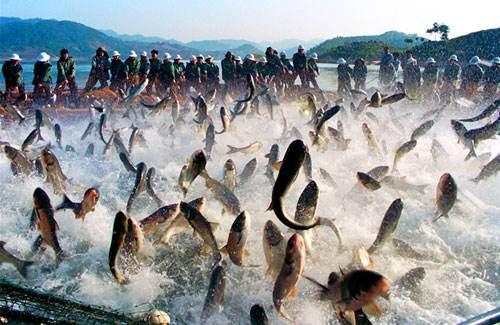 乌干达作为东非主要渔业生产国却花费不少先令进口鱼类产品